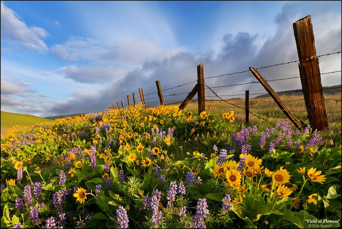 Field Of Flowers Julie Margo